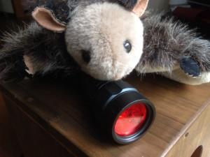 夜のほ乳類ウォッチングには、ライトに赤いセロファン紙をかぶせること。彼らにとって、白い光は刺激的すぎる。ぼくはライトのひとつをムササビウォッチング専用にし、赤いセルロイドを丸く切って装着している。