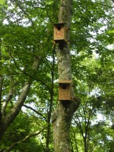 神奈川県南足柄の「ez BBQ country」キャンプ場で、一年に一度「ムササビネスト(巣箱)作り」のイベントをおこなっている。作った巣箱は、キャンプ場周辺の森に設置。去年あたりから、ムササビが頻繁に訪れるようになってきた。 ムササビが舞うキャンプ場なのだ! HP(http://www.ezbbq.com/country/)内の「スタッフブログ」には、キャンプ場から撮ったムササビの動画もアップされている。