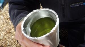ステンレスカップのふちをライムで濡らし塩をつける。そこにテキーラと生しぼりライムをシェイクしたカクテルを注ぐ。気障な飲み物なのだ。