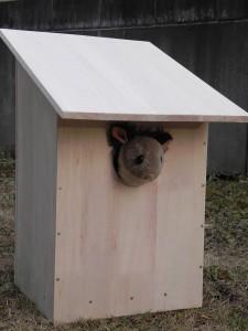 いつかどこかへ設置したい、とまずは巣箱を作ってみた。
