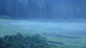 静まり返っている深山の朝。風も立ち止まっているかのようだ。