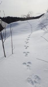 われわれウラヤマ雪中行軍に驚いたウサギが、斜面を逃げていった。