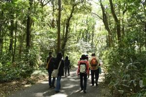 明治神宮の森を歩いて、唯一残念なのは、森の中へ入れないことだ。参道や歩道以外、森の中はすべて立ち入り禁止。もちろん、その理由はよくわかる。 でも、「道を踏みはずす」ことを信条としているぼくとしては、うっそうとした森の中をさまよいたいのだ。