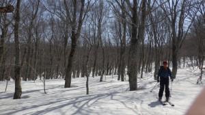 急斜面を滑り終えると、ブナ林の中を滑る楽しいツリーランとなる。